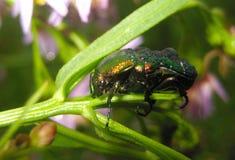 Черепашка на цветах Стоковая Фотография RF