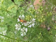 Черепашка на цветках Стоковое Изображение RF
