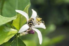 Черепашка на цветке Стоковые Фотографии RF