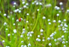 Черепашка на цветке Стоковые Изображения