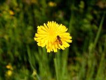 Черепашка на цветке стоковая фотография rf
