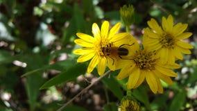 Черепашка на цветке стоковое фото