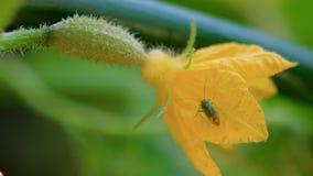 Черепашка на цветя огурце акции видеоматериалы