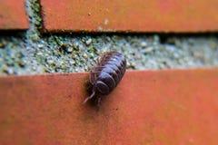 Черепашка пилюльки на стене 2 Стоковые Фото