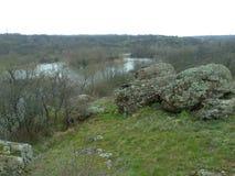 Черепашка реки южная Стоковая Фотография