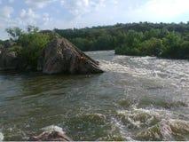 Черепашка реки южная Стоковое фото RF