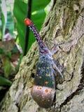 Черепашка фонарика Стоковое Изображение RF