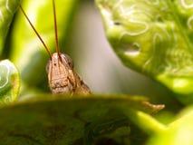 черепашка Стоковое фото RF