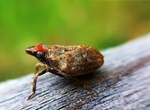 черепашка Стоковая Фотография RF