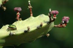 черепашка Стоковое Фото