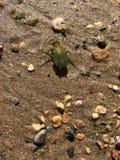 черепашка Стоковые Фотографии RF