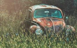 Черепашка VW стоковые изображения