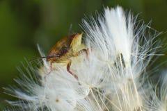 черепашки жуков стоковые фотографии rf