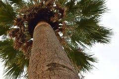 Черепашки наблюдают взгляд высокорослой и гордой пальмы Стоковое Изображение RF
