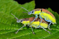 Черепашки на зеленых лист Стоковое Изображение RF