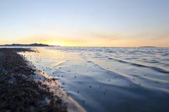 Черепашки плавая в Большое озеро стоковые фото