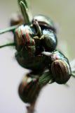 черепашки Стоковое Изображение RF