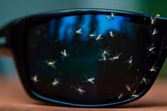 Черепашки splattered на солнечных очках Стоковая Фотография RF