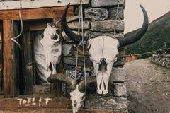 Черепа одичалых horned животных Справочная информация Стоковая Фотография
