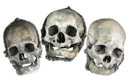 черепа 3 Стоковые Изображения RF