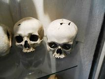 черепа Стоковые Фото