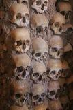 черепа Стоковые Фотографии RF