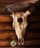 Череп азиатского буйвола Стоковая Фотография