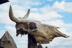 Череп быка Стоковая Фотография