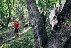 Череп в лесе стоковые фото