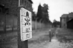 Череп в Освенциме Стоковые Фотографии RF