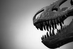 Череп динозавра T-Rex с свободной предпосылкой Стоковые Фото