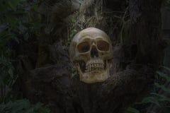 Череп и косточки digged вне от ямы в страшном погосте найденном в джунглях Не знать род, не знать имя, ожидание для стоковые изображения rf