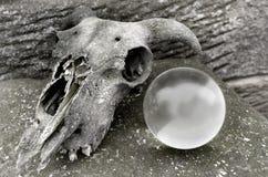 Череп и хрустальный шар стоковое фото rf