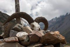 Череп козы в Гималаях, Непале Стоковое Фото