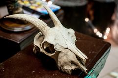 Череп козы как трофей звероловства на таблице Стоковая Фотография
