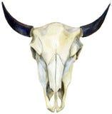 Череп коровы акварели Стоковая Фотография RF