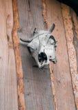 Череп коровы на деревянной стене Стоковое Изображение