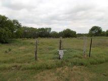Череп коровы прикрепленный к загородке Стоковые Изображения
