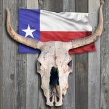 Череп коровы Техаса Стоковая Фотография