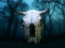 Череп коровы Стоковая Фотография
