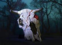 Череп коровы Стоковые Фотографии RF