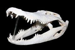 череп крокодила Стоковое Фото