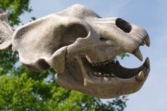 Череп медведя пещеры доисторический Стоковые Фотографии RF