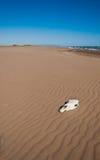Череп на пляже Стоковое фото RF