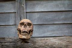 Череп на старой древесине 1 жизнь все еще Стоковые Изображения RF