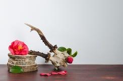 Череп оленей косуль с камелиями для украшения Стоковые Изображения