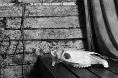 Череп лошади против предпосылки старой ткани Стены грубых доск и веревочки Стоковое Фото
