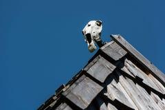Череп лошади Стоковые Фото