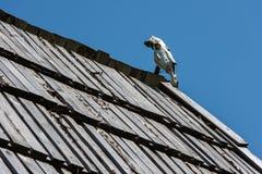 Череп лошади Стоковое Фото