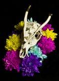 Череп оленей с цветками Стоковые Фотографии RF